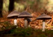 Mushrooms Aglow