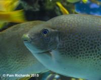 Pams Fish 4