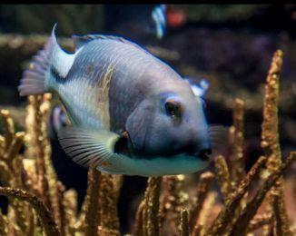 Pams Fish1