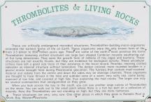 Thombolites