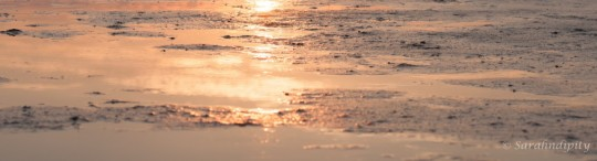 cropped-mud-flats-reflection2wm.jpg