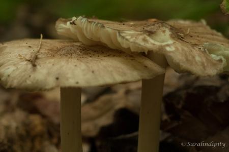 Mushroom3WM