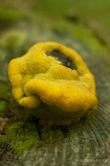 Mushroom4WM